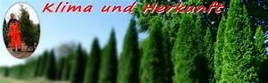 Thuja Brabant Oder Smaragd : startseite ~ Orissabook.com Haus und Dekorationen