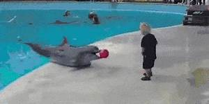 Dolphin GIF - Find & Share on GIPHY