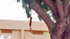 Noose Found Hanging From Tree at Mayfair High School in ...