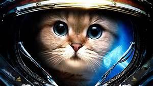StarCraft, James Raynor, Astronaut, Space, Cat, Starcraft ...