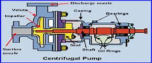 Main Components Of Centrifugal Pump