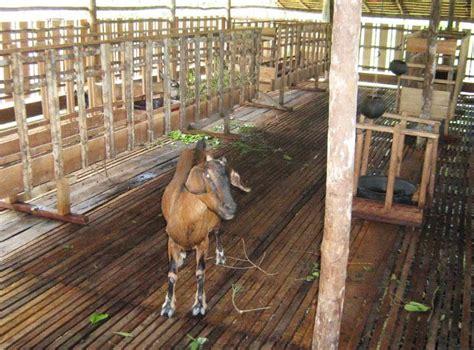 Vlog pembuatan kandang kambing baru sebagai motivasi dan referensi. 14 Gambar Desain Kandang Kambing Bambu Panggung - Madani ...