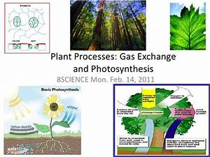 Plant Processes Photosynthesis