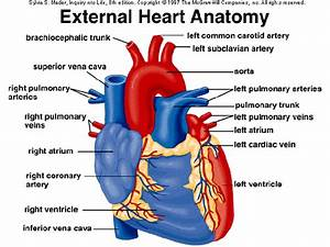 Why Doesn U0026 39 T The Heart Skip Out The Right Ventricle