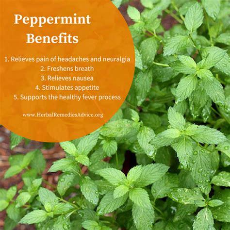 peppermint tea benefits peppermint health benefits