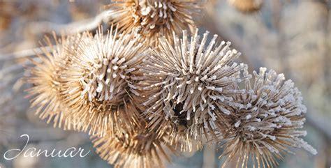 Garten Pflanzen Januar by Aldi S 220 D Gartenkalender Januar
