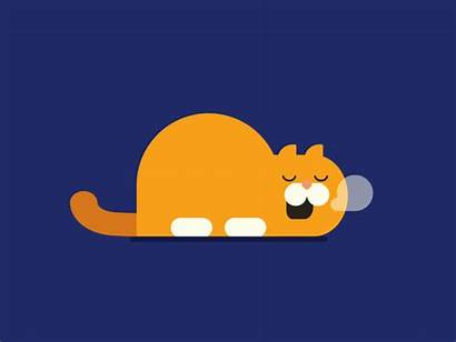 Sleepy Cat Dribbble Animation Animated Loop Shots