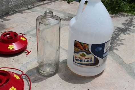 how to clean hummingbird feeders surfbirds com