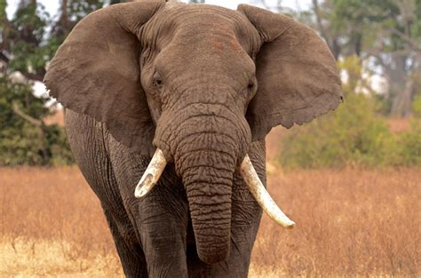 Africa's Safari Big Five