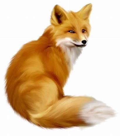 Fox Clipart Animals Renard Dessin Animaux Foret