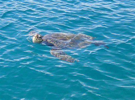 Catamaran Trips In Honolulu by Diamond Head Sail And Snorkel Adventure Bike Hawaii