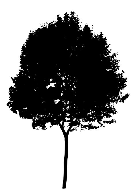 tree free stock photo illustration of a tree silhouette 15116