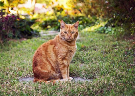 outdoor cat cage indoor cat or outdoor cat choosing the right cat for