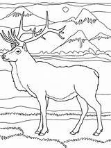 Elk Coloring Pages Mountain Mountains Rocky Drawing Pencil Moose Printable Deer Drawings Getdrawings Getcolorings Lion Popular sketch template