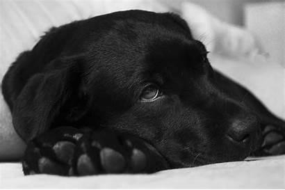 Dog Glands Needs Expressed Know