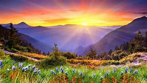 Awesome, Sunset, Sun, Rays, Forested, Mountains, Beautiful, Mountain, Flowers, With, Green, Grass, Desktop
