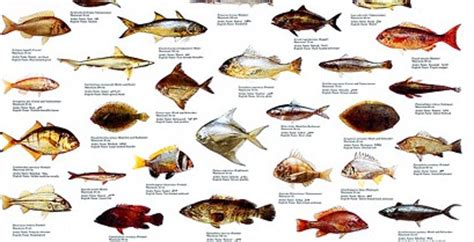 uae fish species emirates fishing