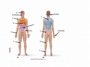 Unit I  Language Of Anatomy
