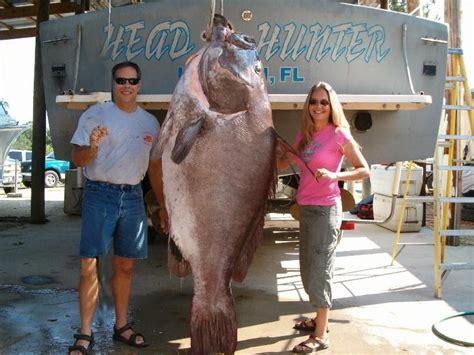 grouper goliath caught florida largest biggest record giant poisson itajara monde fish huge gigante du monster epinephelus fishes gros pez