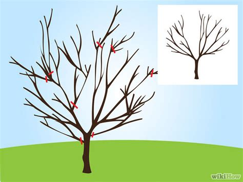 how to prune ornamental cherry trees pruning ornamental cherry trees 100 images prunus pandora buy cherry blossom tree flowering