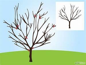 3 Ways To Prune A Cherry Tree