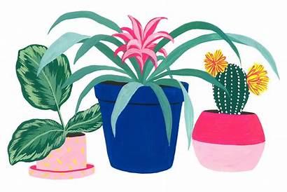 Common Plants Guide Houseplants Apartmenttherapy Plant