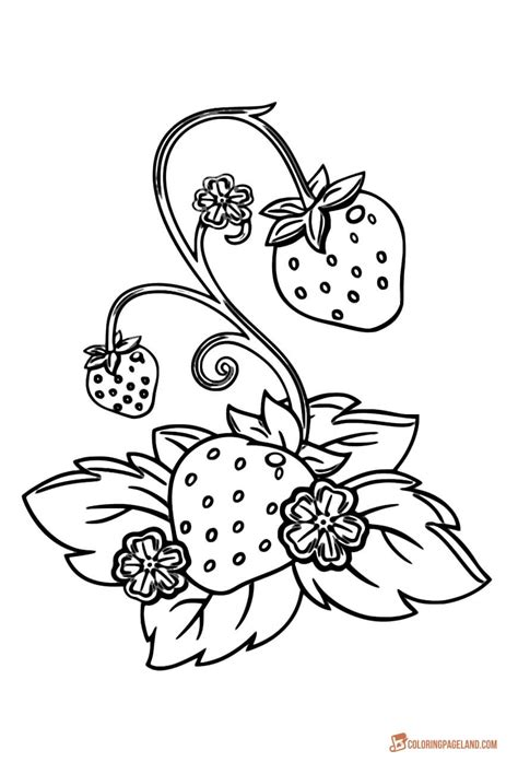 strawberry coloring pages downloadable  printable images