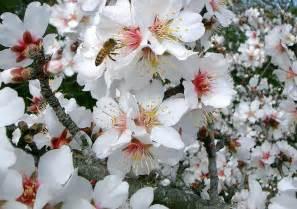 Flowering Tree Identification