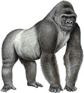 Gorilla Resumen by El Gorila Ambientalista