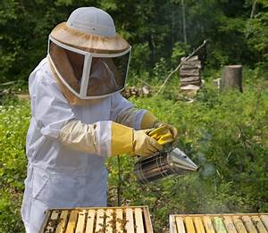 What is Apiculture? (with pictures)