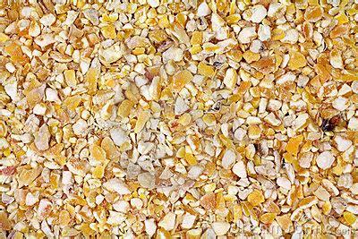 cracked corn bird seed royalty free stock photo image