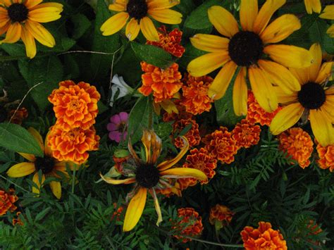 fall flowers best mp3 player