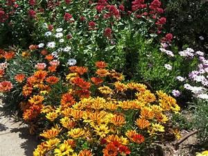 Blumen Für Sonnigen Standort : blumen f r die sonne w hlen tipps f r 12 h bsche exemplare ~ Michelbontemps.com Haus und Dekorationen