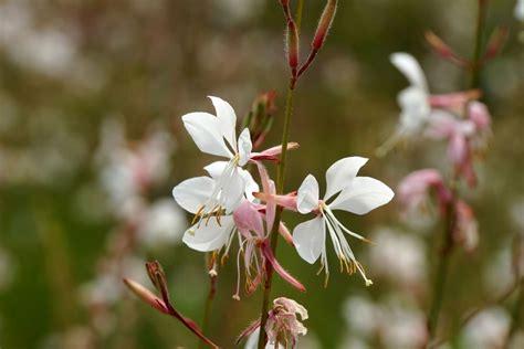 Kletterrosen Pflanzen Und Pflegen by Kletterrosen Pflanzen Und Pflegen Kletterrosen Pflanzen