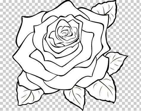 keren  bunga mawar rose galeri bunga hd