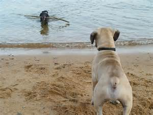 Downs Park Dog Beach Maryland