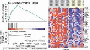 Gene set enrichment analysis (GSEA) for NOROS. GSEA ...