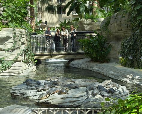 gaylord palms resort  convention center experience