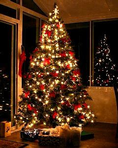 trees uk grown cut fresh to order uk home ideasuk home ideas