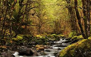 landscape, , river, , forest, wallpapers, hd, , , , desktop, and, mobile, backgrounds