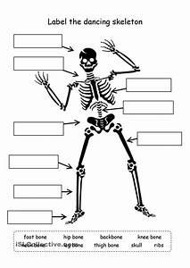 Worksheet  Human Skeleton Worksheet  Grass Fedjp Worksheet Study Site