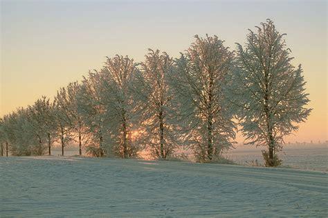 winter morning sun snow  photo  pixabay