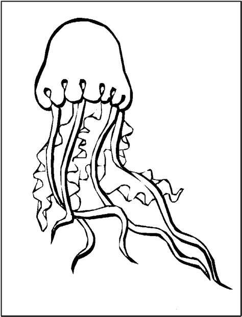sea animal jellyfish coloring sheet