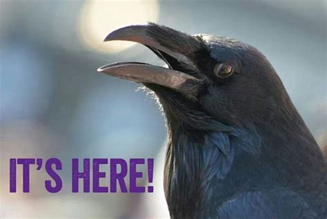 1000+ Images About Rise & Conquer (our Ravens) On