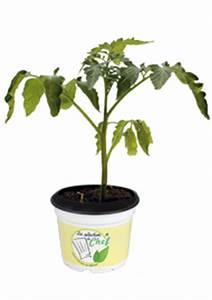 Paprika Pflanzen Abstand : tomate cornabel f1 andenh rnchen au ergew hnlich ~ Whattoseeinmadrid.com Haus und Dekorationen