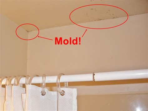 bathroom mold removal techniques