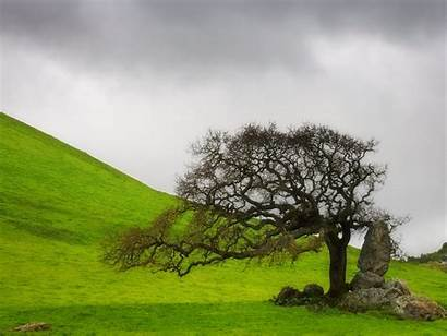 Wallpapers Trees Widescreen Wnp