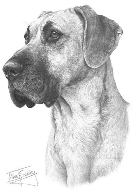 great dane fine art dog print  mike sibley