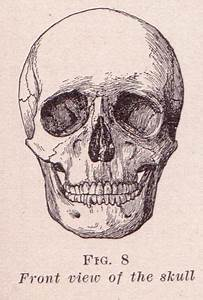 Front View Of Skull In 2020