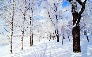 The Colors of Nature: Snow-White   AmO